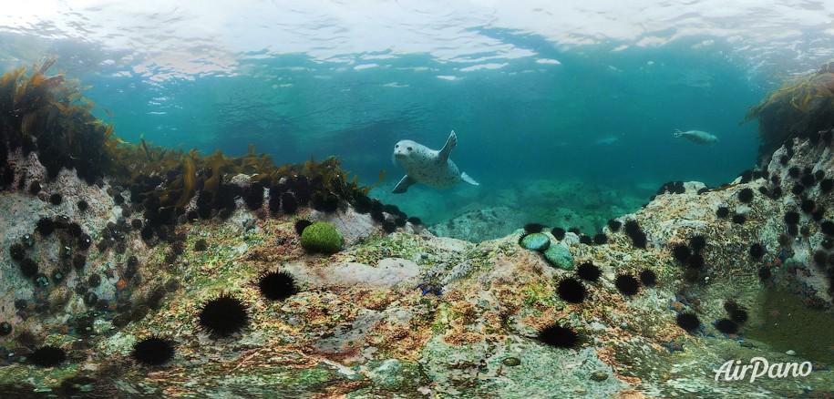 Дайвинг с ларгой. Японское море, Россия