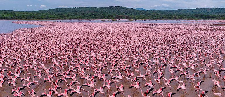 Resultat d'imatges de lakuru lake