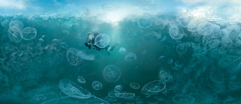 Jellyfish Bay, Raja Ampat, Indonesia - AirPano.com • 360° Aerial Panoramas • 360° Virtual Tours Around the World