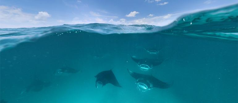 Manta Rays, Maldives - AirPano.com • 360° Aerial Panoramas • 360° Virtual Tours Around the World