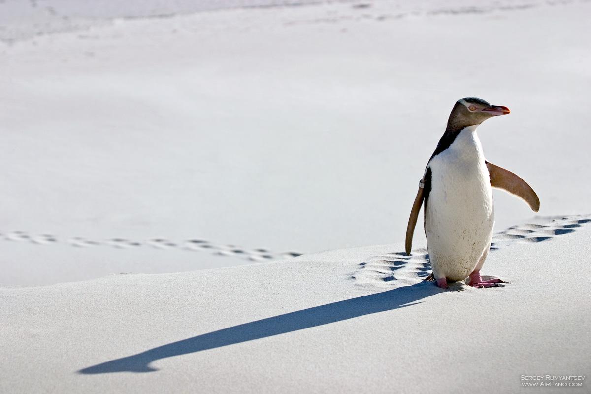 результате небольших сарафаны пингвин фото решил