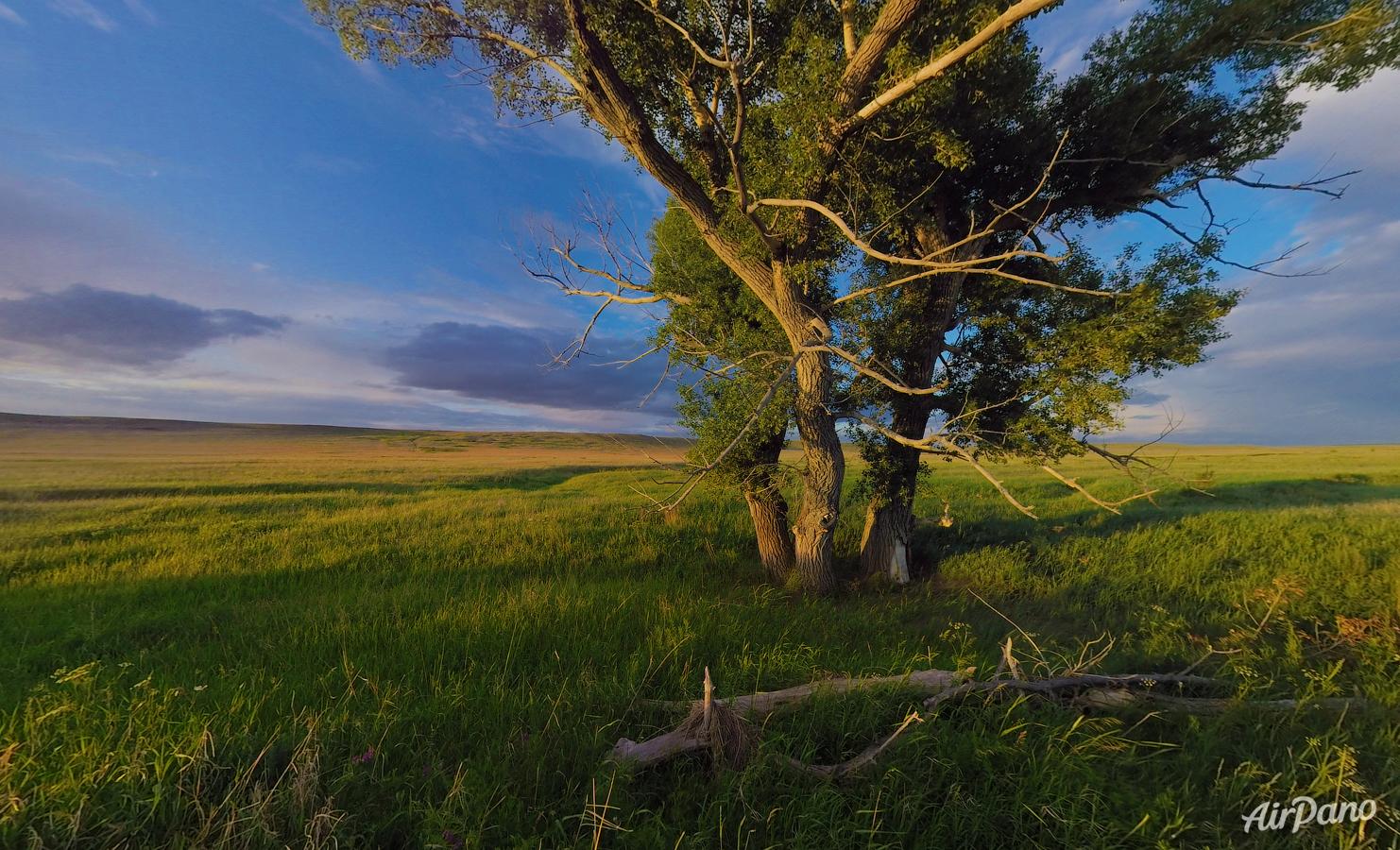 деревья в степи фото и названия настоящее